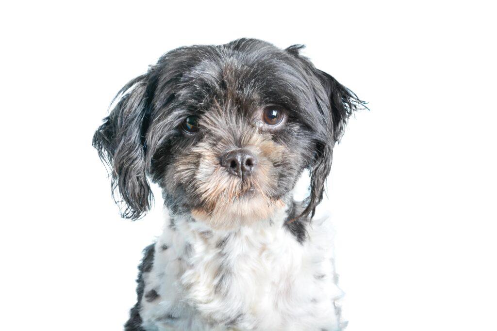 Gedragsbegeleiding honden bij ongewenst gedrag