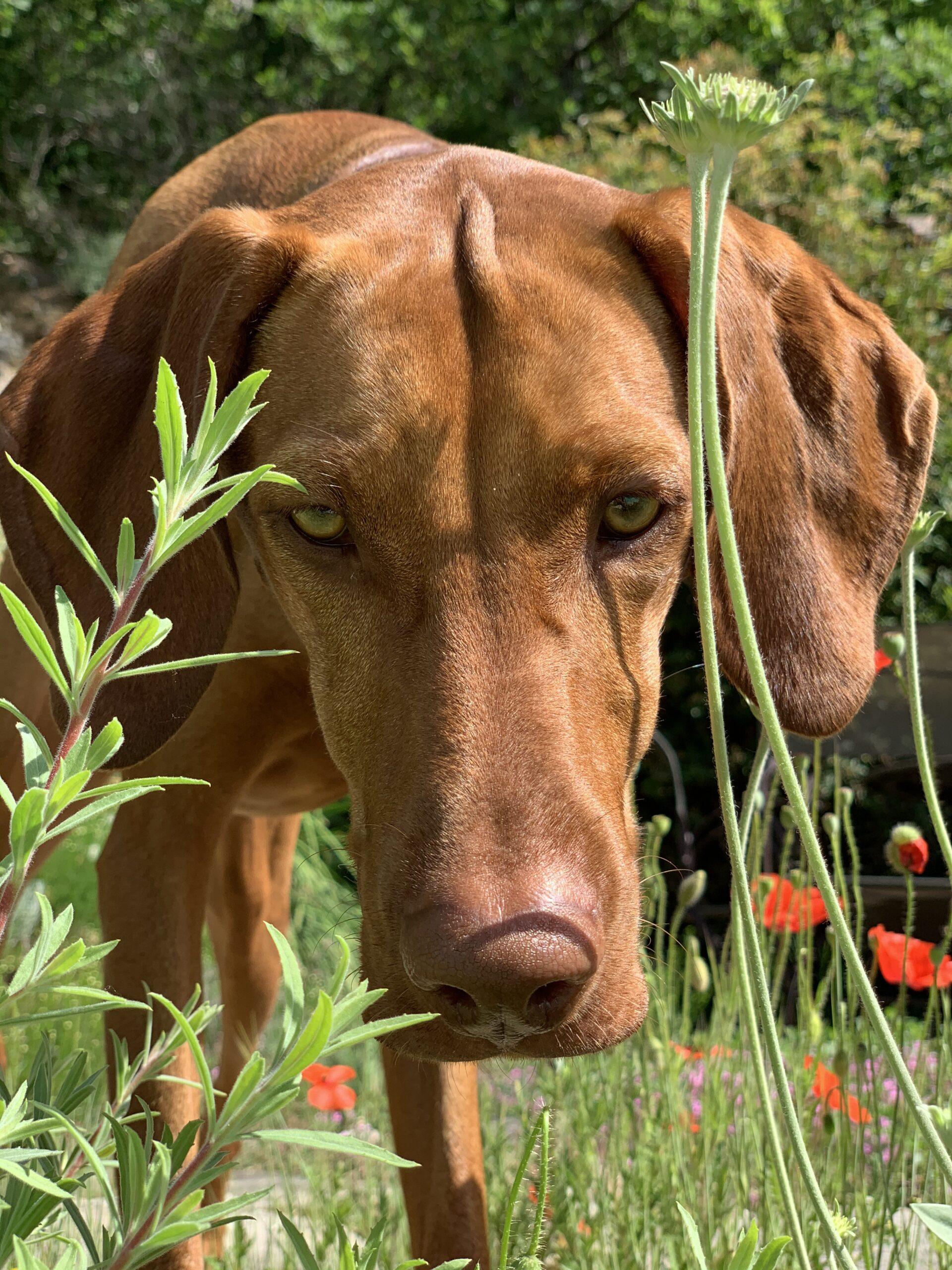 'Natural dog training'